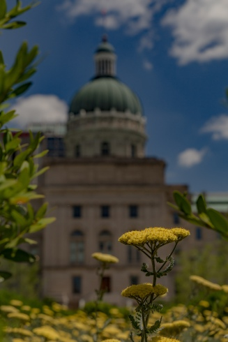 Flowers on the Bicentennial Plaza behind the Indiana Statehouse